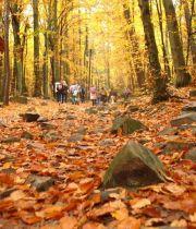 Szlak królewski(pielgrzymkowy) jesienną porą..